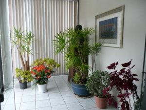 玄関前植物